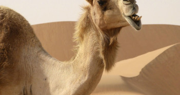 Stuck in a Sales Sahara Desert - What to Do When Sales Dry Up