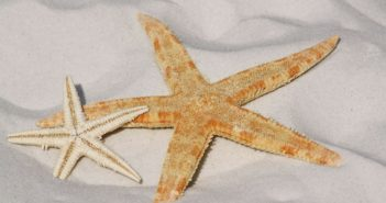 Beach Holiday - Starfish