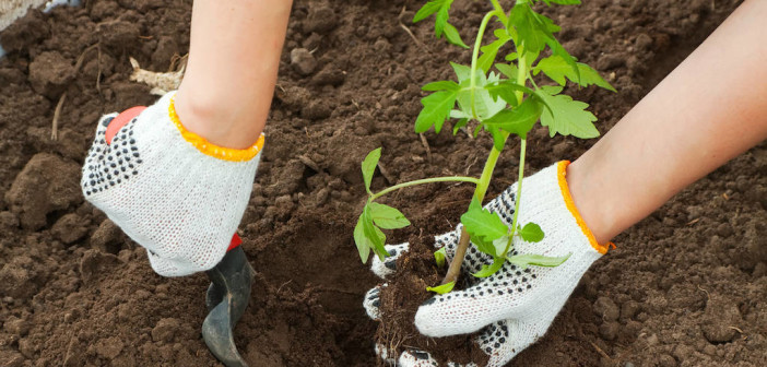 Time to Get Growing - Gardening Tips for Beginners